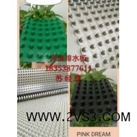 天津屋顶种植绿化排水板/车库顶板排水板多少钱一平方_图片